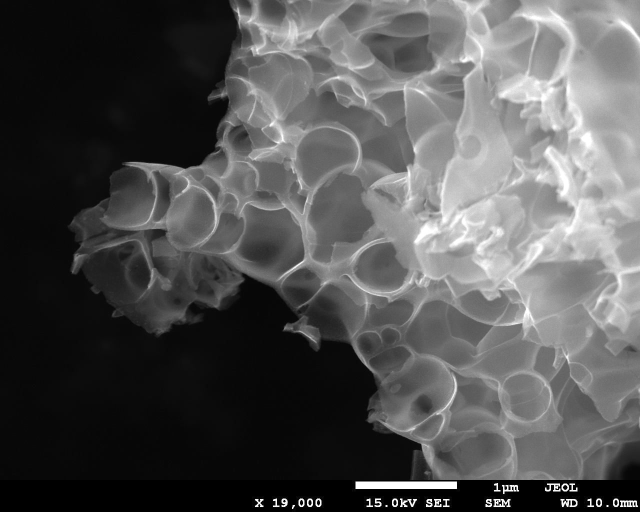 SEM image of one of the ORR catalysts. Image courtesy of Zoe Schnepp
