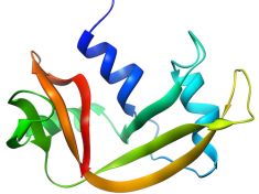 Structure of RNase A, PDB id 2AAS, generated using w:UCSF Chimera (CC-BY-SA licensed from: https://commons.wikimedia.org/wiki/File:RNase_A.png)